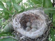 Малое гнездо с яичками Стоковое Изображение RF