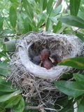 Малое гнездо цыпленоков Стоковые Фото