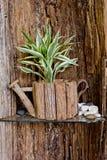 Малое дерево в деревянном цветочном горшке с деревянной предпосылкой Стоковое Изображение RF