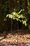 Малое дерево в лесе стоковая фотография