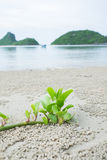 Малое дерево на пляже Стоковые Фото