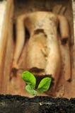 Малое дерево перед статуей Будды Стоковое фото RF