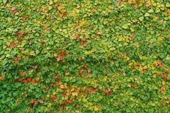 Малое дерево растет на стене утеса Стоковое Изображение RF