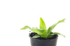 Малое дерево растя в пластичных баках Стоковое фото RF