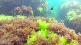 Малое заплывание рыб среди рифов сток-видео