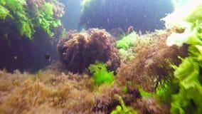 Малое заплывание рыб среди рифов акции видеоматериалы