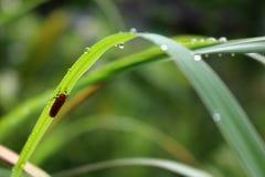 Малое красное насекомое под длинным зеленым цветом выходит Стоковые Фотографии RF