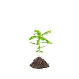 Малое молодое зеленое растение на белой предпосылке, в зависимости от так Стоковые Изображения RF