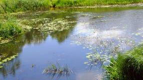 Малое, молчаливое река Стоковая Фотография