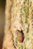 Малое насекомое в зеленом саде Стоковая Фотография