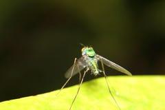 Малое насекомое в зеленом саде Стоковая Фотография RF