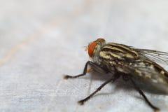 Малое насекомое в зеленом саде Стоковые Фотографии RF