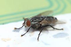 Малое насекомое в зеленом саде Стоковое Изображение RF