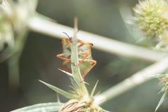 Малое насекомое летания спрятанное за заводом Стоковое фото RF