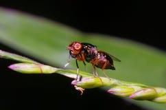 Малое насекомое мухы в саде Стоковое Изображение RF