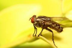 Малое насекомое мухы Стоковое Изображение RF