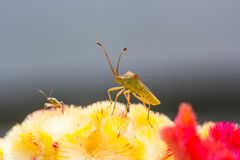 Малое насекомое на цветке Стоковые Изображения