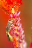 Малое насекомое на цветке Стоковая Фотография