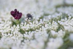 Малое насекомое смотря на камеру близко к фиолетовой тычинке Стоковое Фото