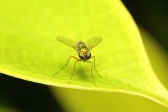 Малое насекомое Стоковое фото RF
