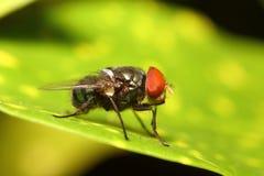 Малое насекомое Стоковые Фотографии RF