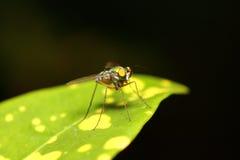 Малое насекомое Стоковое Изображение