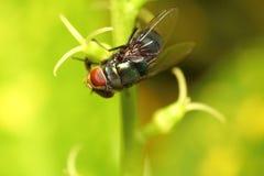 Малое насекомое Стоковые Изображения