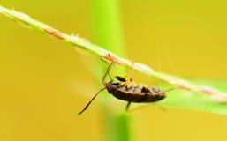 Малое насекомое Стоковое Изображение RF