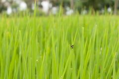 Малое насекомое Стоковое Фото