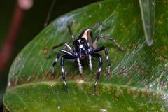 Малое насекомое Стоковая Фотография