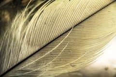 Малое перо птицы под увеличением Макрос Стоковые Фотографии RF