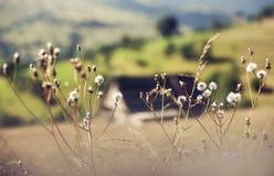 Малое поселение в горе Дома, флигели и поля Стоковое фото RF