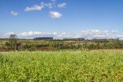 Малое поле цветка Стоковые Фото