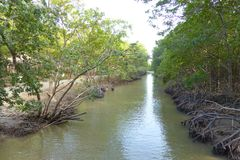 Малое река в лесе мангровы Стоковые Изображения RF