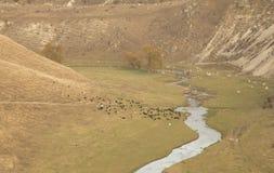 Малое река в коровах скал долины Стоковая Фотография