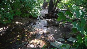 Малое река с уткой сток-видео