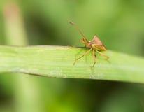 Малое старое насекомое Стоковое фото RF