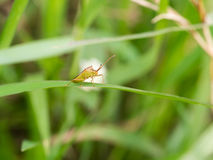 Малое старое насекомое Стоковые Фото