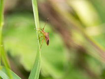 Малое старое насекомое Стоковые Изображения