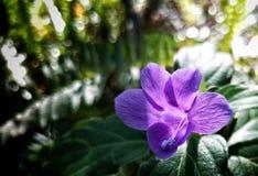 малое цветка пурпуровое Стоковое Изображение