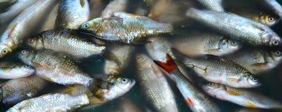 Малое Fishs Стоковые Изображения