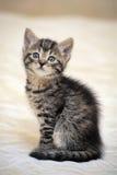 Малое striped усаживание котенка Стоковые Фото