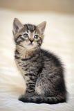 Малое striped усаживание котенка Стоковая Фотография RF