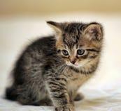 Малое striped усаживание котенка Стоковое Изображение