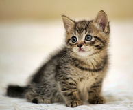 Малое striped усаживание котенка Стоковая Фотография