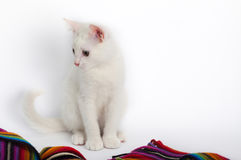 мало кот осени поздно сидя белизна стоковое изображение