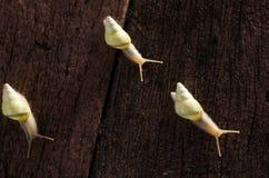 Малые белые улитки Стоковые Изображения RF