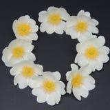 Малые белые цветки на черной предпосылке Стоковое фото RF