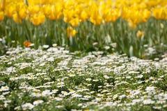 Малые белые цветки стоковое фото