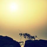 Малые бонзаи природы березы над глубокой туманной долиной вполне пучков утра тяжелых тумана Стоковое Фото